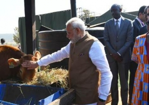 PM Modi gifts 200 cows to villagers in Rwanda